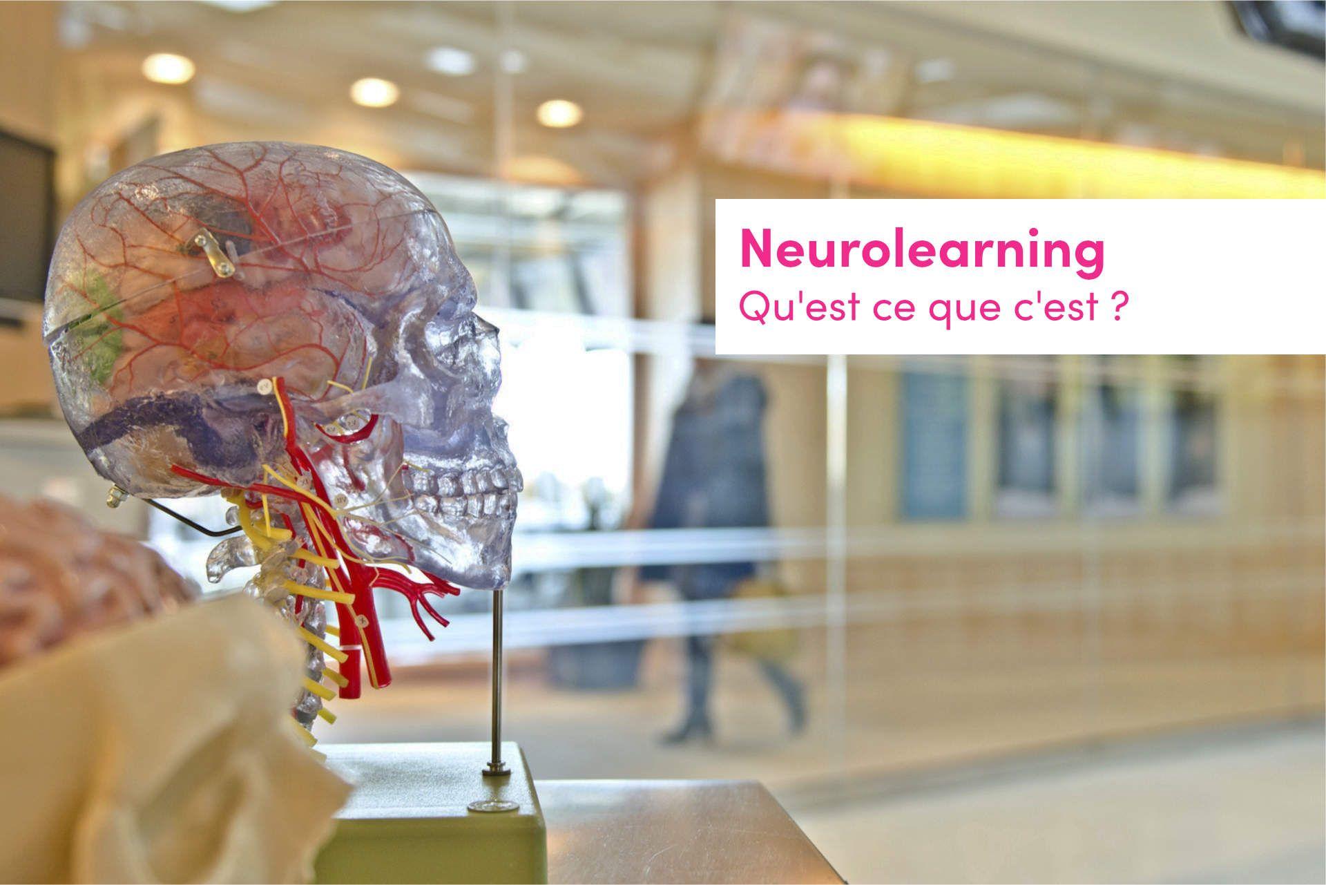 neurolearning-qu-est-ce-que-c-est-thinkovery