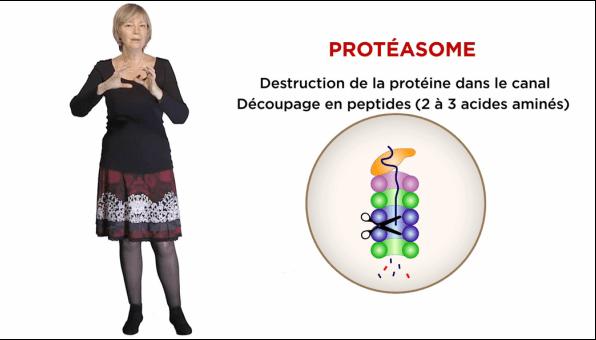 Le MOOC Cellules et cellules souches a été co-produit par Thinkovery, l'INSERM et l'Université de Nantes avec le soutien de L'Oréal Research and innovation.